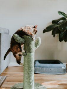 gato de estrés
