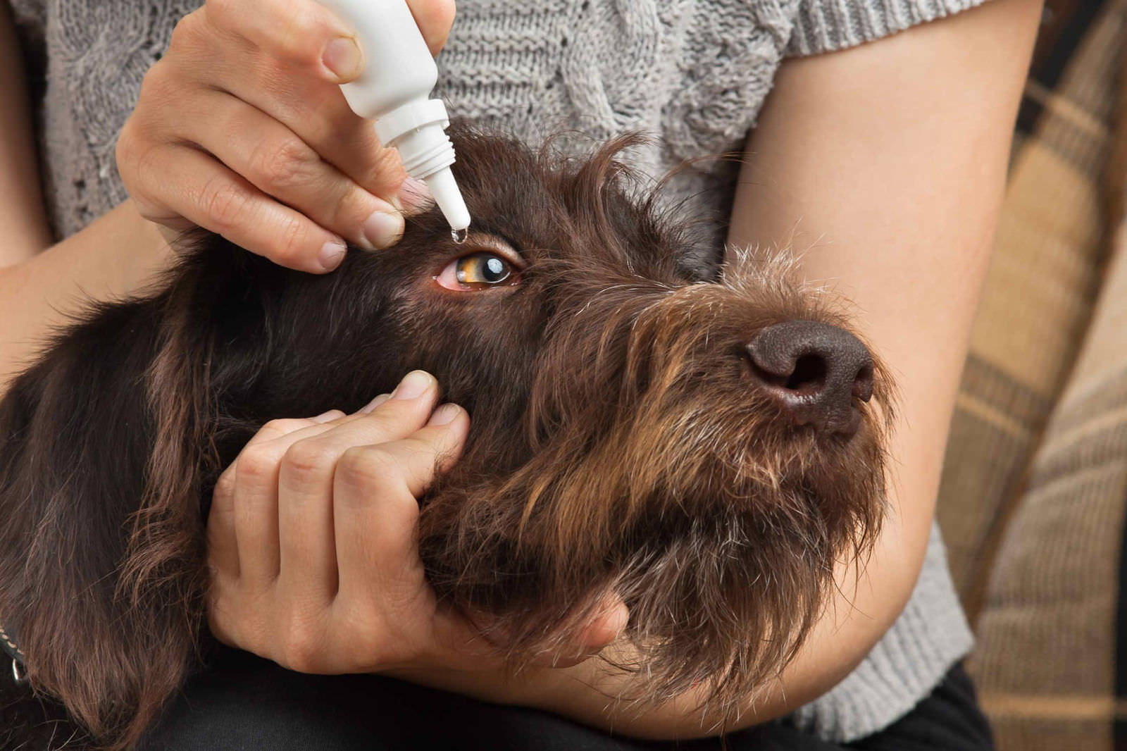 remedios para el ojo seco