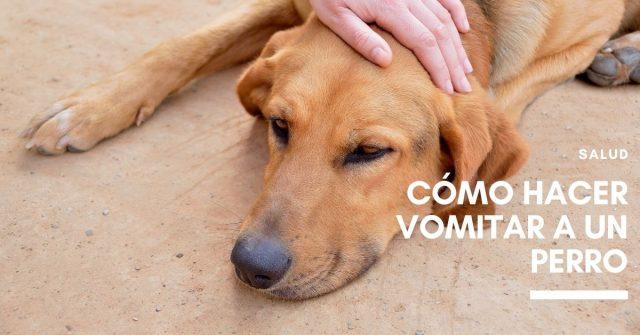Cómo hacer vomitar a un perro