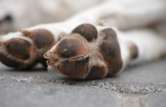 Consejos para cuidar las almohadillas de tu perro