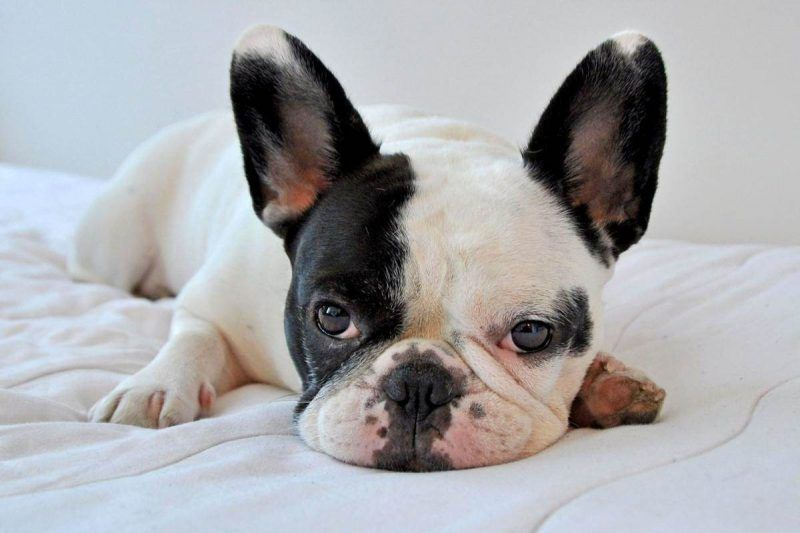 Síntomas de problemas digestivos en el perro