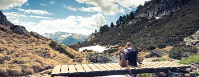 Vacanze in montagna: come proteggere il cane dalle zecche