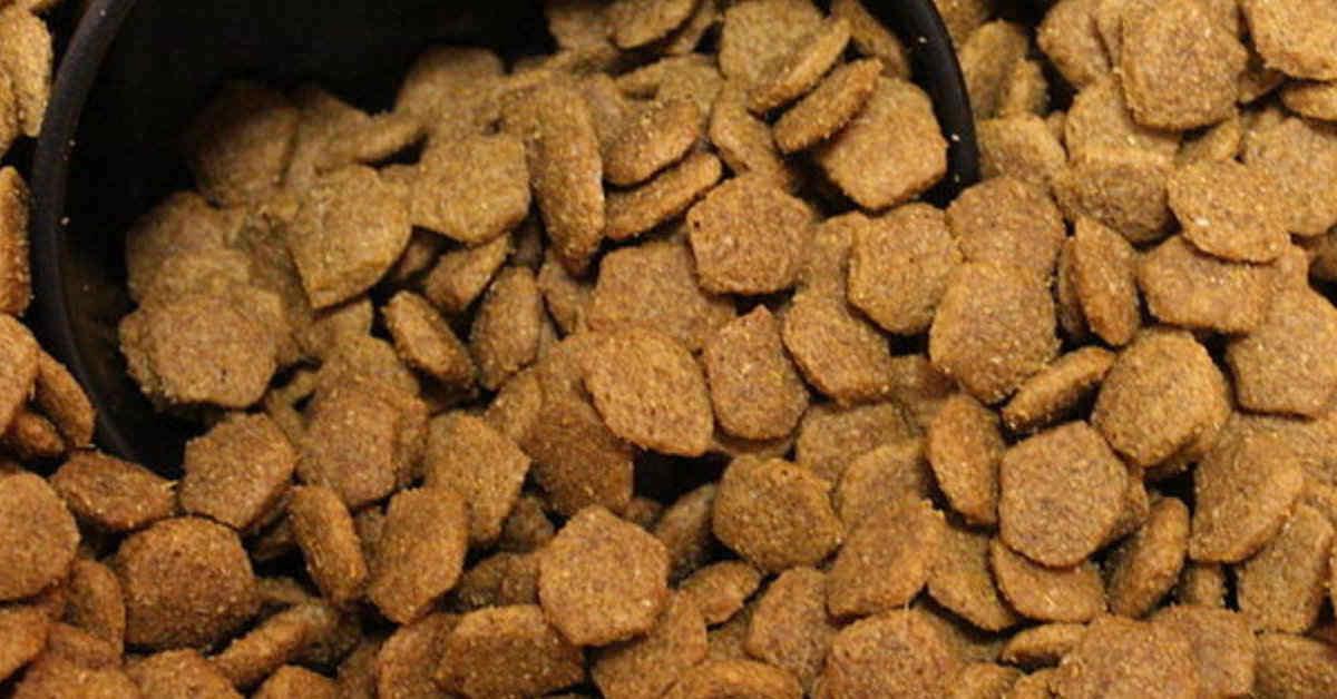 comida seca perro