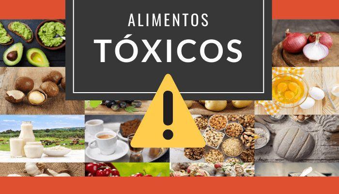 alimentos toxicos perros