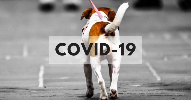 como cuidar perro durante cuarentena covid-19