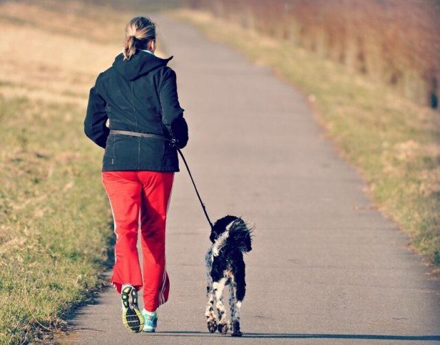 Correr con perro consejos