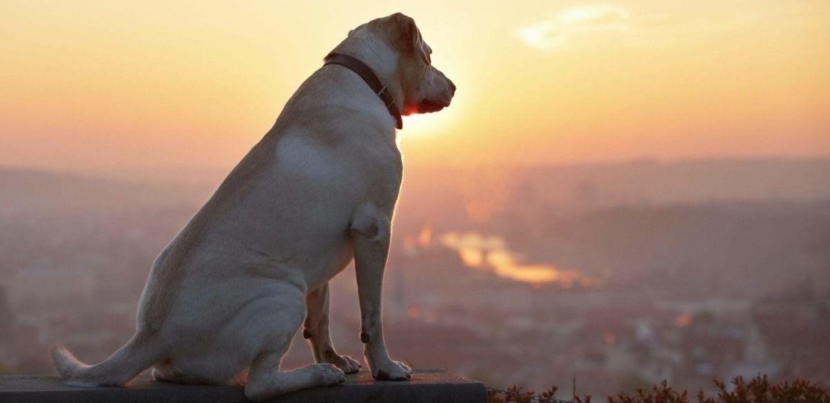 Cuanto tiempo viven los perros
