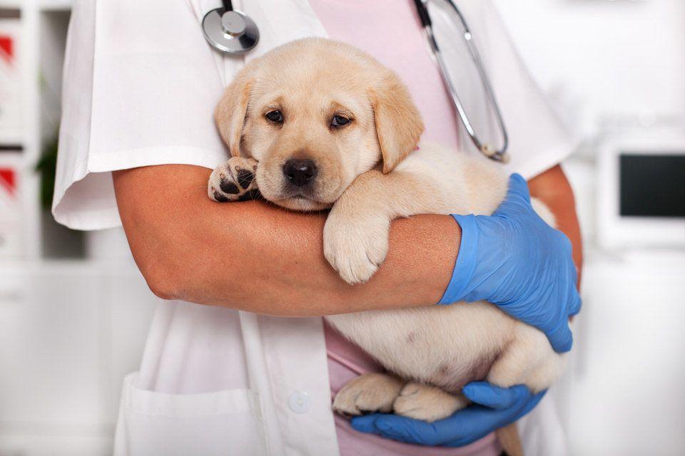 causas diarrea en cachorro