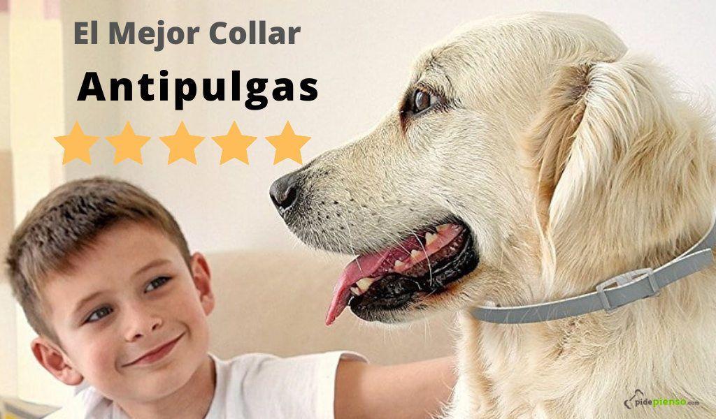 Mejor collar antipulgas para perros
