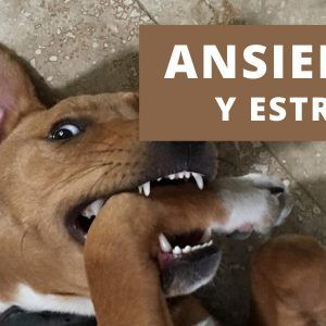 estres y ansiedad en perros