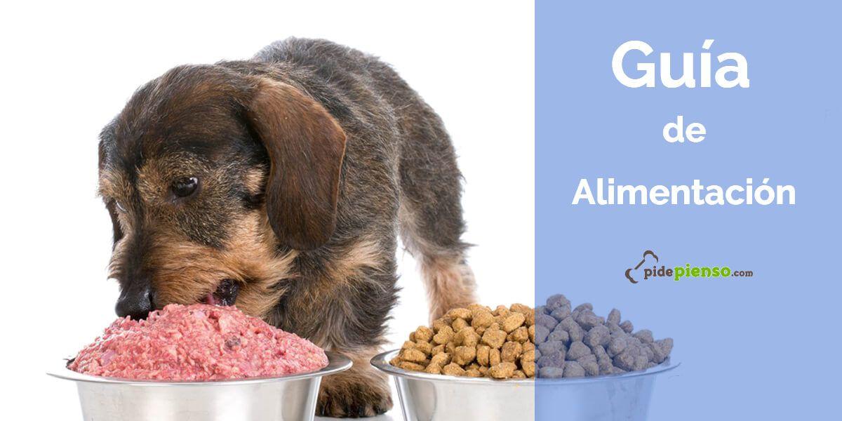 como alimentar perro