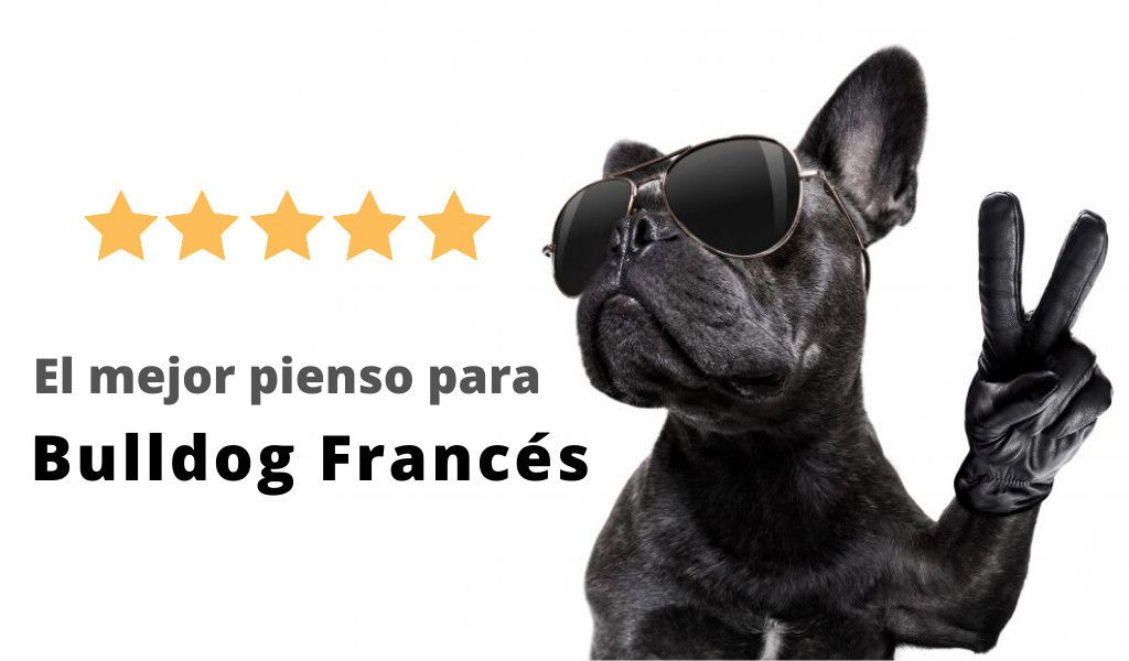 piensos para bulldog frances