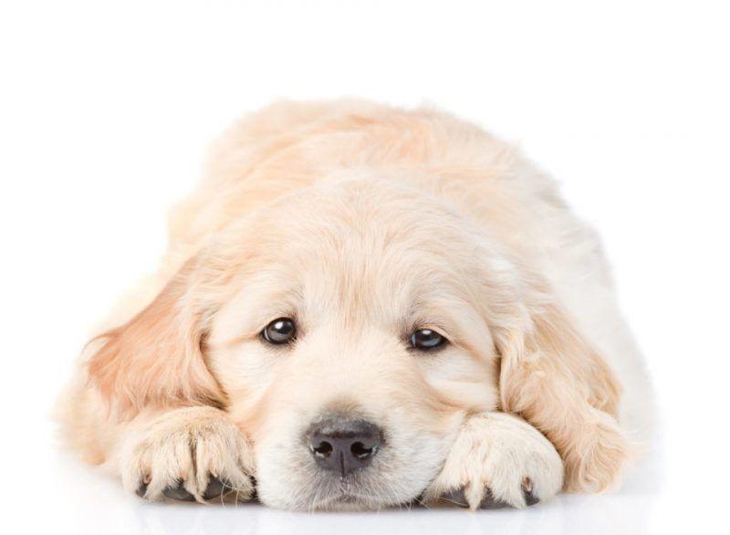 Mi cachorro vomita