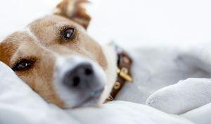 gastroenteritis vírica en el perro