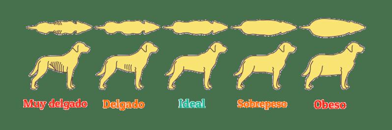 peso de los perros