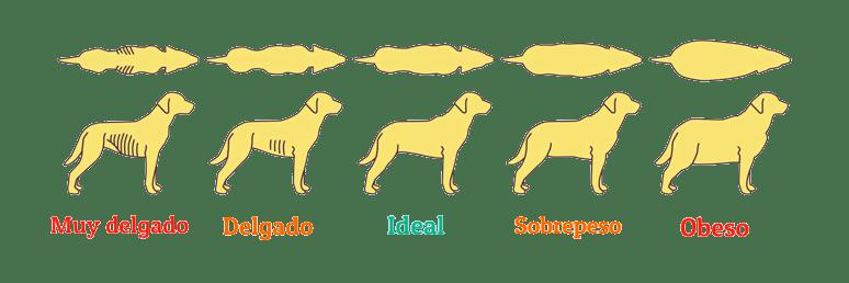 cual es el peso ideal de los perros