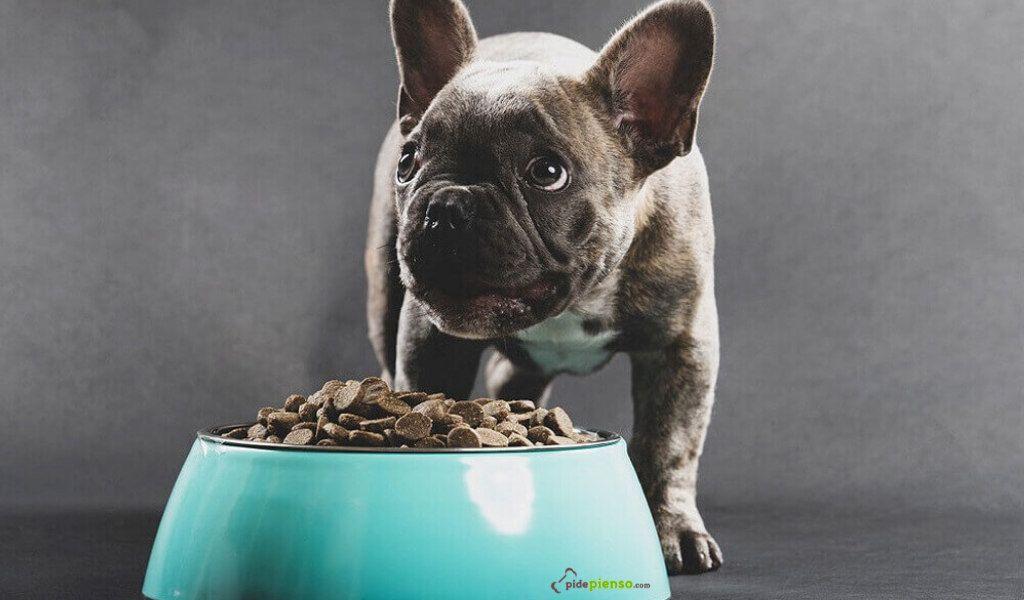 pienso bulldog frances con o sin cereales