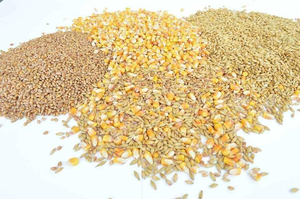 piensos grain free