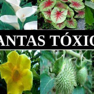 plantas y flores tóxicas para los perros