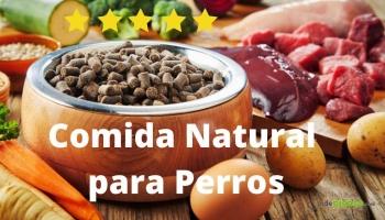 Comida natural para perros, todo lo que NO sabes