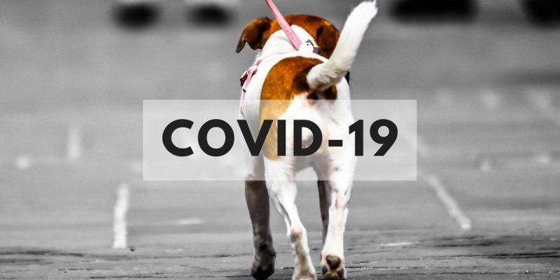 Cómo cuidar a tu perro durante la cuarentena del Coronavirus COVID-19