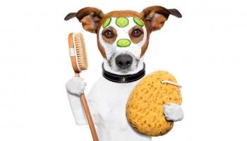 Cómo hidratar la piel de tu perro