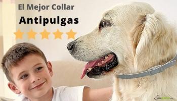 Mejor collar antipulgas para perros 🥇