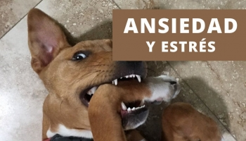 10 Métodos para tratar el estrés y la ansiedad en perros