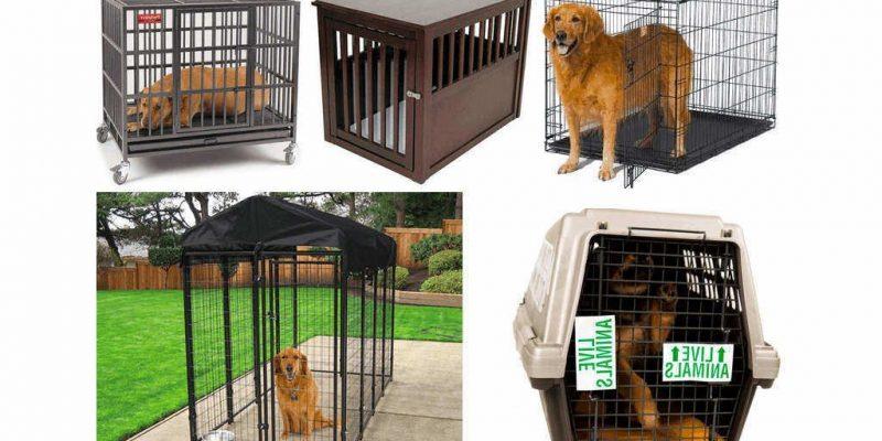 Las mejores jaulas para perros 2020 🥇