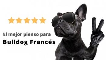 El mejor pienso para un bulldog francés 🥇