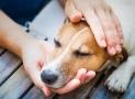 Mi perro vomita sangre: lista de 15 causas