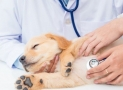 Parvovirus canino: Prevención, Diagnóstico y Tratamiento