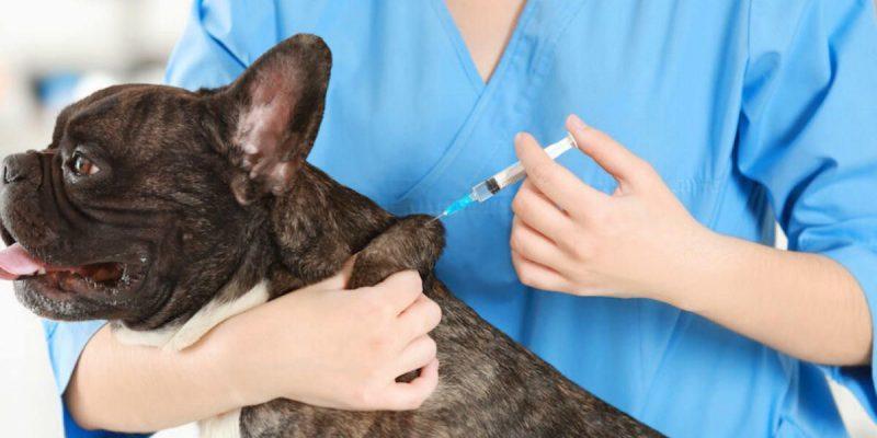 ¿Es obligatoria la vacuna de la rabia para perros?