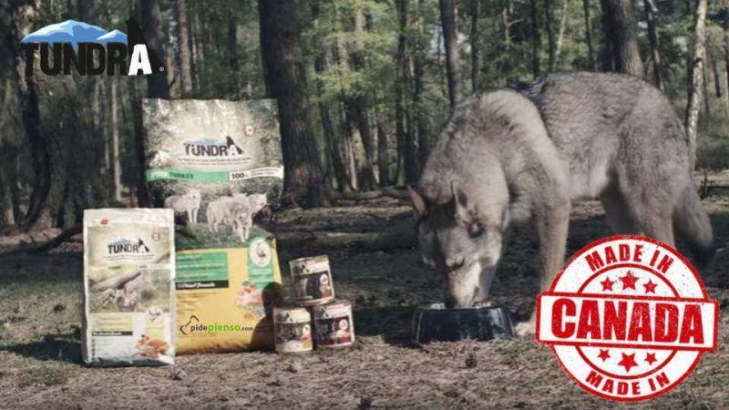 Tundra para Perros